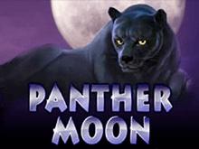 Panther Moon на зеркале бесплатно